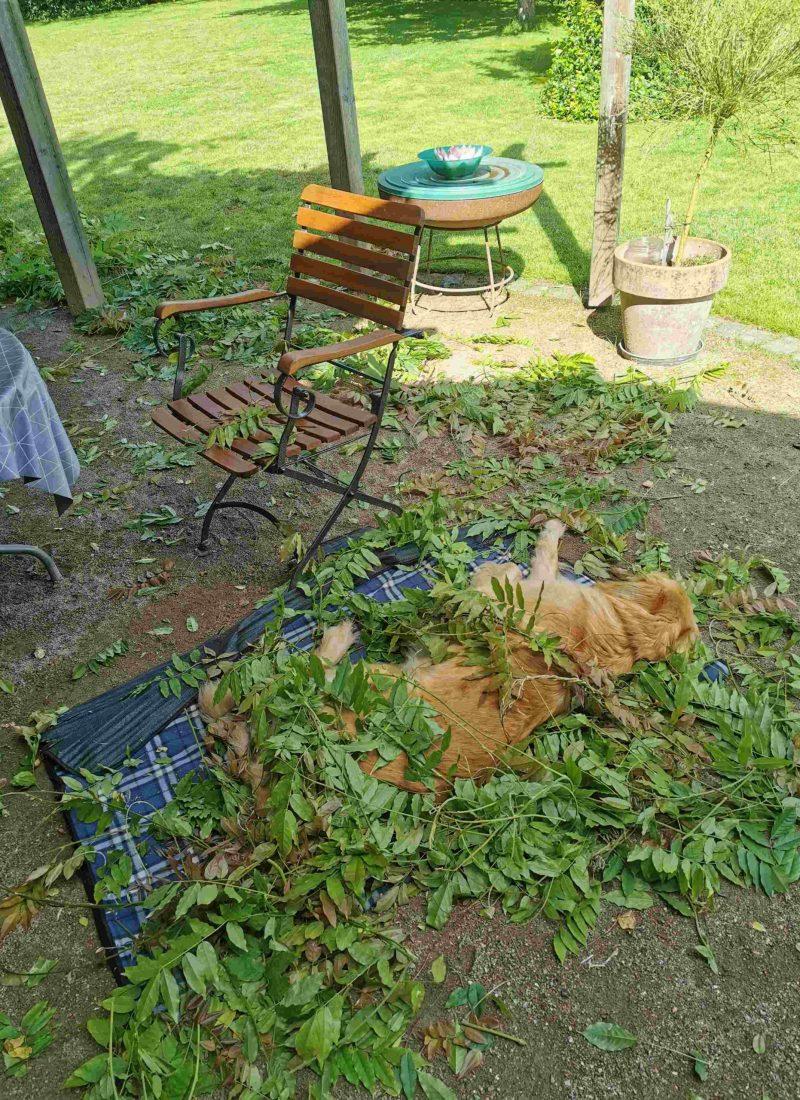 Käthe auf Terrasse und Garten34